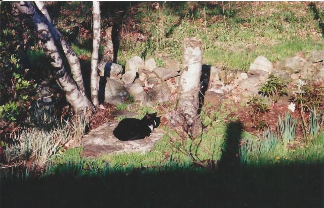 Pandacat2